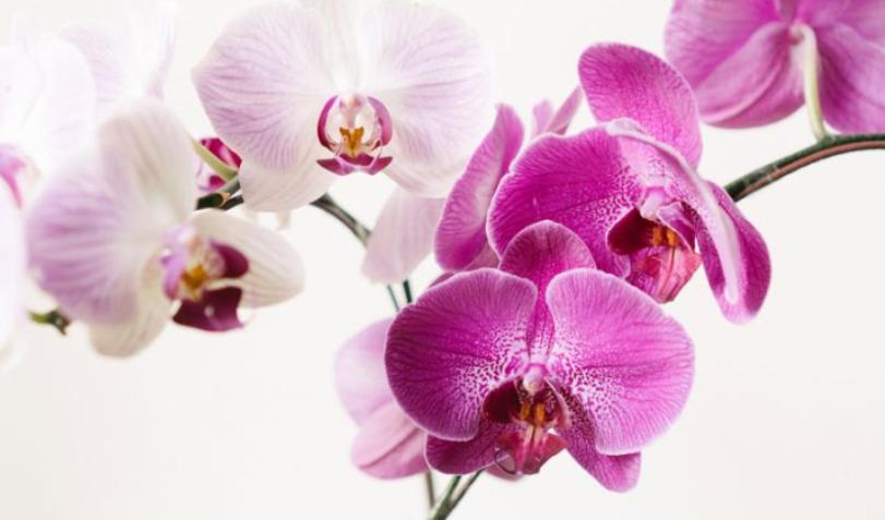 bunga anggrek yang indah