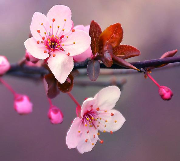 100+ Gambar Bunga Berbagai Jenis Yang Indah, Cantik, Mahal Dan Langka